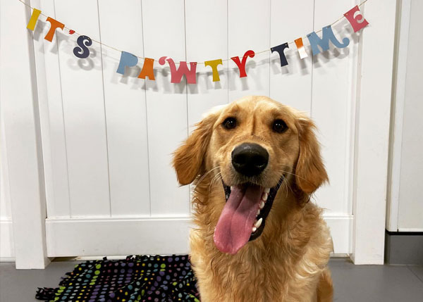 Dog smiling with Pawty Time banner behind him